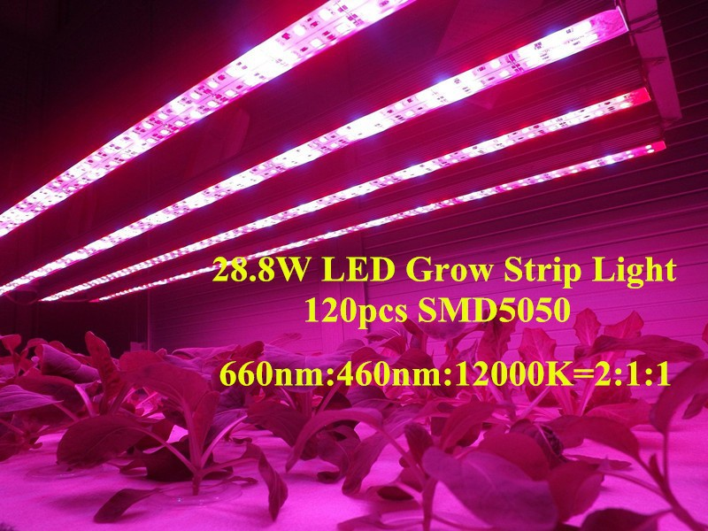Popular indoor hydroponic lights 288w smd 5050 rigid led strips popular indoor hydroponic lights 288w smd 5050 rigid led strips plant growth lights 660nm 460nm free shipping in led grow lights from lights lighting on mozeypictures Images