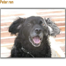 Peter ren DIY Diamond Painting Cross stitch Round drill or Square diamond icon Mosaic full embroidery Summer black dog