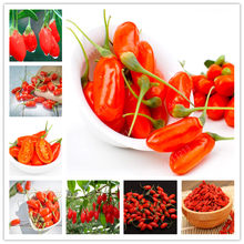 100Pcs Goji Berry Chinese Wolfberry Bonsai Herbs Bonsai Potted Plants Home Garden Outdoor House Plants, Most Popular Heathy(China)