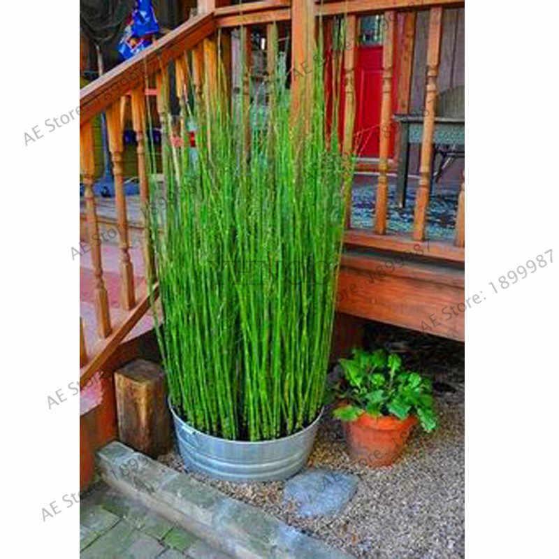 أفضل بيع! يمكن زراعتها في الداخل الطازجة موسو الخيزران بونساي شجرة النباتات 60 قطع DIY حديقة المنزل ، # GUFAPU