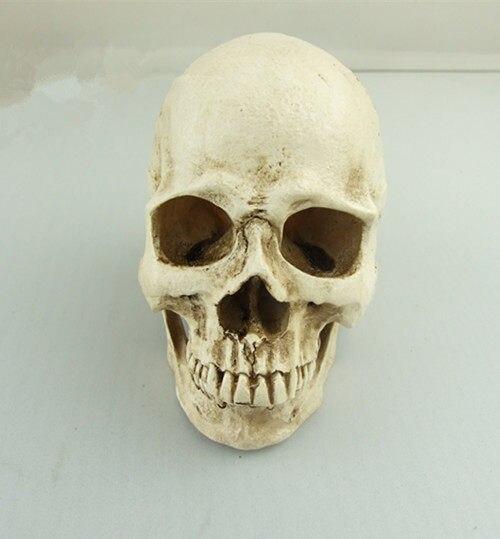 Tienda Online Mini piel humana ps4 dental anatomía esqueleto ...