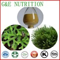 Pure Natural Huperzia Serrata Extract/20% Huperzine A /Clubmoss Extract