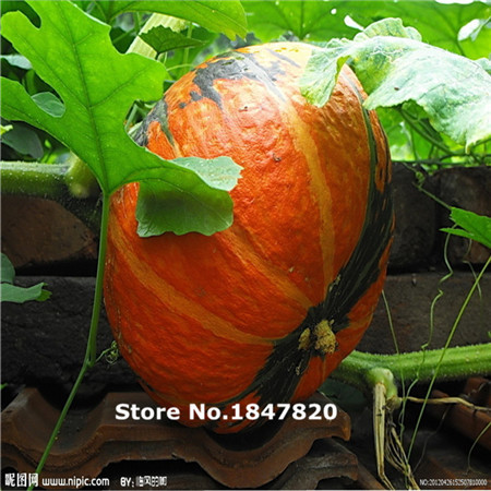 AAA Rare Pumpkin Seeds, 10 kinds 100 Mix Colors vegetable Seeds, High survival Rate for Home and Garden.