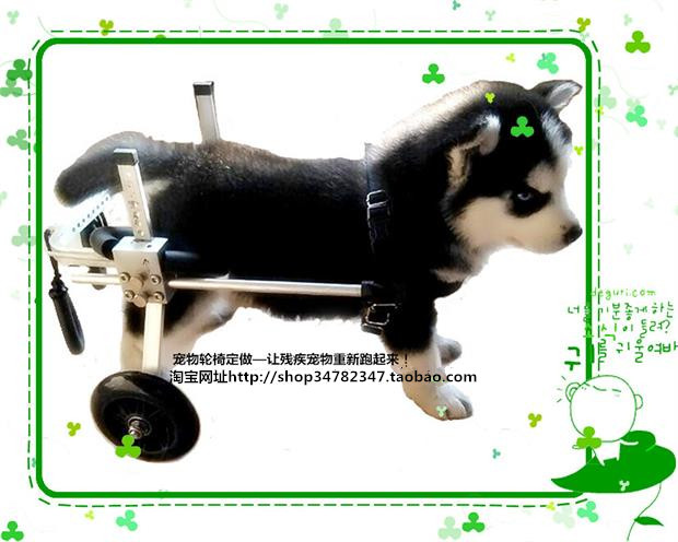 font b Disabled b font dogs scooter paralyzed dogs font b wheelchairs b font Pet