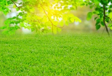 Laeacco Photo Backgrounds Spring Green Grass Tree Light Bokeh Lawn Child Scenic Photography Backdrops Photocall Studio
