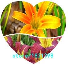 100 шт./пакет, Hemerocallis семена, тони лилейников, посадка В Горшках, посевных сезонов, цветущие растения Семена цветов