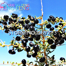 50pcs Wholesale 100% Authentic Black Wolfberry Seeds Goji Berry Succulent Plants Seed Rare Plants Bonsai Organic Seeds Sementes(China)