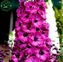 Bonsai seeds Forking Larkspur Salmon King (Delphinium consolida) Family garden decoration Organic Flower  free shipping 100PCS