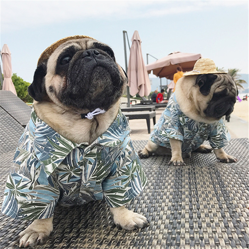 Eyedog Summer Dog Clothes Pet Shirt Pug French Bulldog Frenchie Clothing Drop Shipping Costume Arel In Shirts From Home Garden