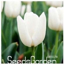 Best-Selling!Tulip bonsai, not tulip bulbs, hydroponic bonsai flower tulip seeds – 50 Seeds/Lot,#CD685N
