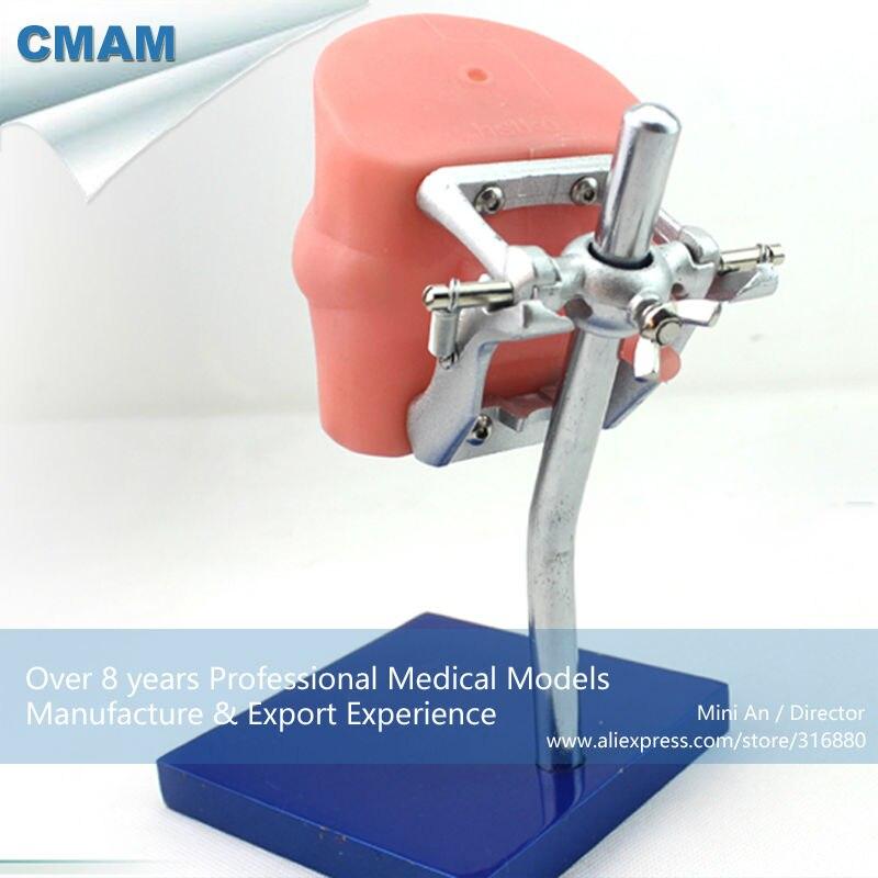 12557 CMAM DENTAL01 Oral Simulation Practice System Dental Phantom ...