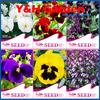Beautiful Pansy Seeds Mix Color Wavy Viola Tricolor Flower Seeds Bonsai Potted DIY Garden Free Shipping