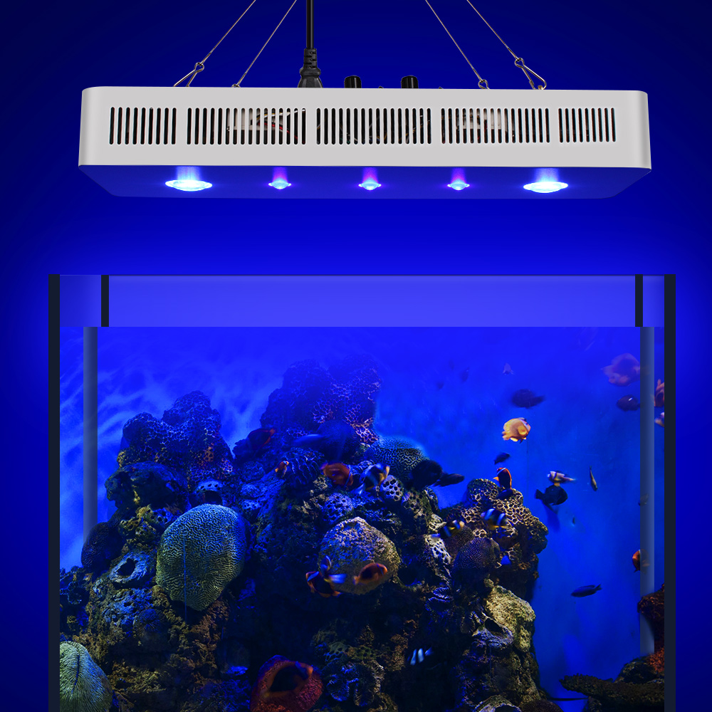 Wifi COB + LENS 169W ծովային լուսավորությամբ - Մասնագիտական լուսավորություն - Լուսանկար 6