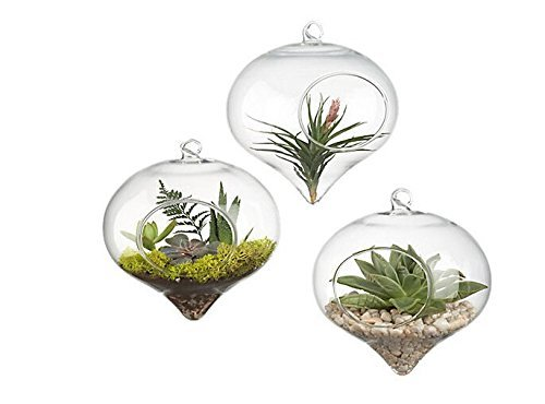 Pack Of 3 Glass Hanging Planter Hanging Air Plant Terrarium Hanging