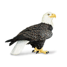 Genial NewBiFo Genuine Rare Bird Prey American Bald Eagle