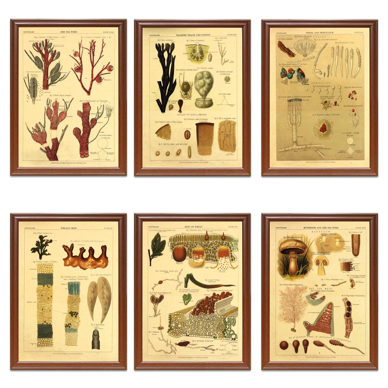 Vintage Octopus illustration A1 A2 A3 A4 A5 Vintage Art Print Poster