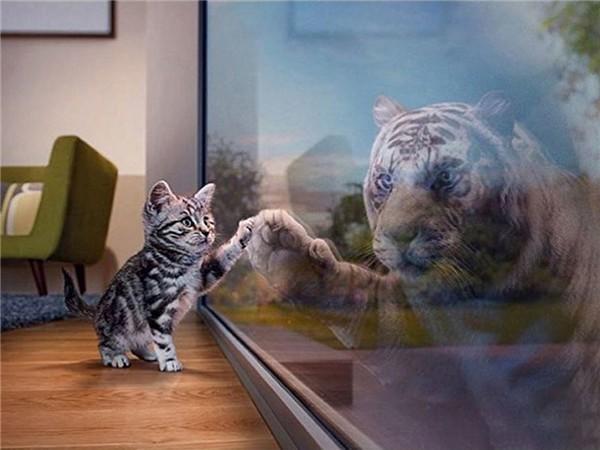 Mirroring Animals