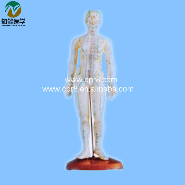 Acupuncture Human Body Model  Female (In Chinese) 48CM BIX - Y1009  MQ016 free shipping english medical female human body acupuncture point model 48cm