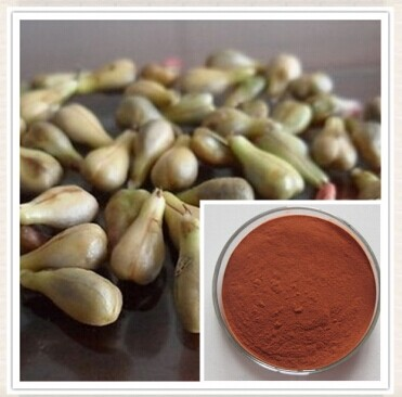 Top quality 1KG Grape Seed Extract Powder 95% OPC Powerful Antioxidant ,Anti-aging,Promotes healthy skin free shipping