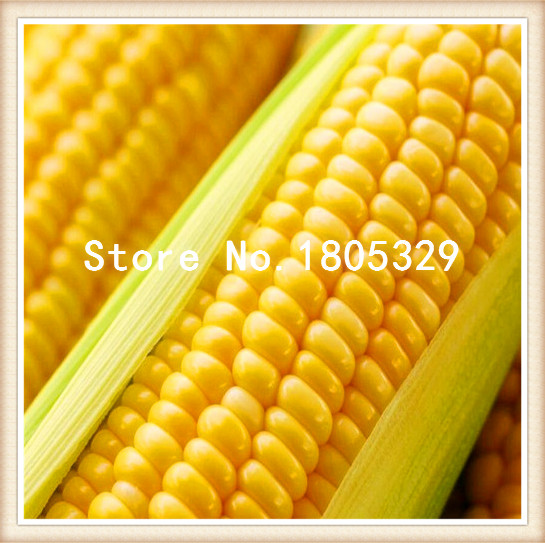 Hot Sale corn seeds pineapple fruit strawberry color sweet corn corn balcony potted 50 Free Shipping