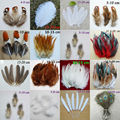 50 pcs 15 kinds of Natural Pheasant  Chicken Feathers  home Christmas Cosplay decoration clothing shoes hat accessories