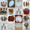 50 unids 15 clases de Ciencias Naturales Plumas de Faisán Pollo casa de Navidad decoración Cosplay ropa zapatos sombrero accesorios