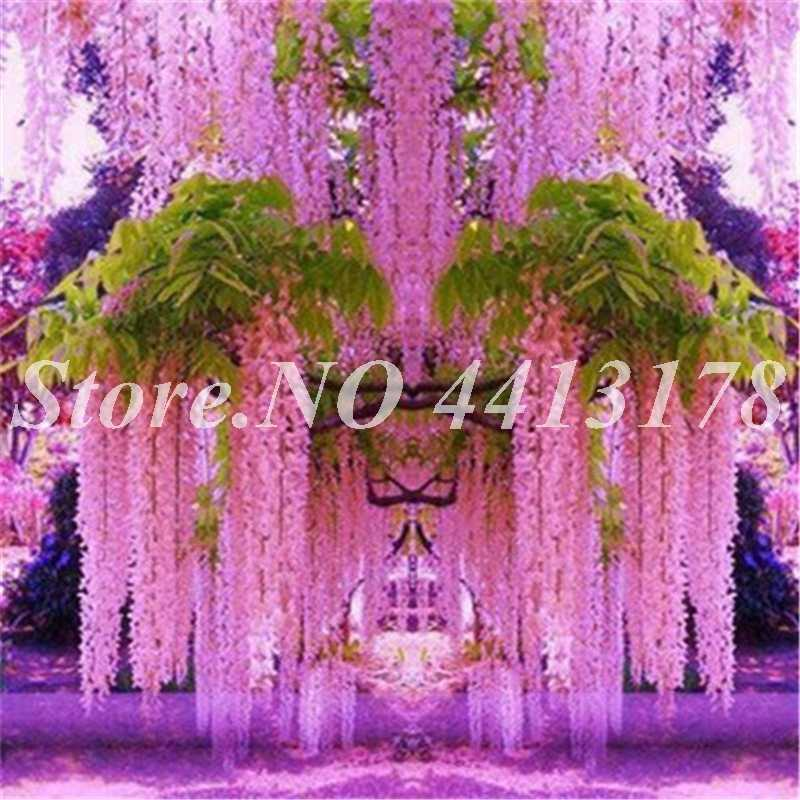 Бонсай 20 шт ползучий бонсай цветы глицинии открытый сад двора цветы японский Вистерия свежий реалистичный удивительный альпинист