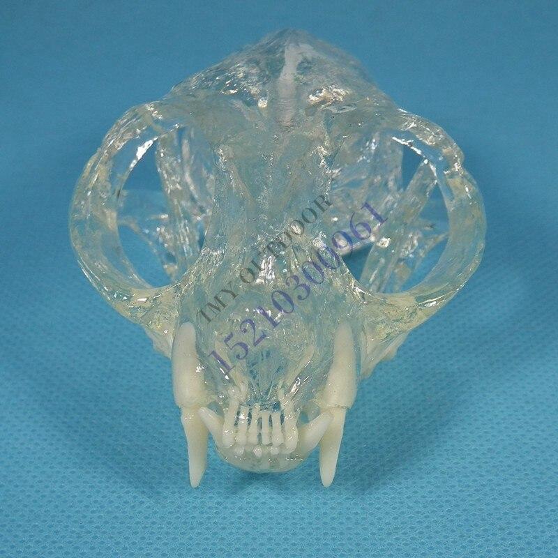 動物モデル猫歯頭蓋骨顎モデル動物の骨解剖透明送料無料  グループ上の オフィス用品 & 学用品 からの 医療科学 の中 1