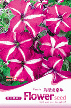 Jiabao chaixing Petunia Petunia seed orchard every year, the original packaging, 30 / bag, long blooming flowers