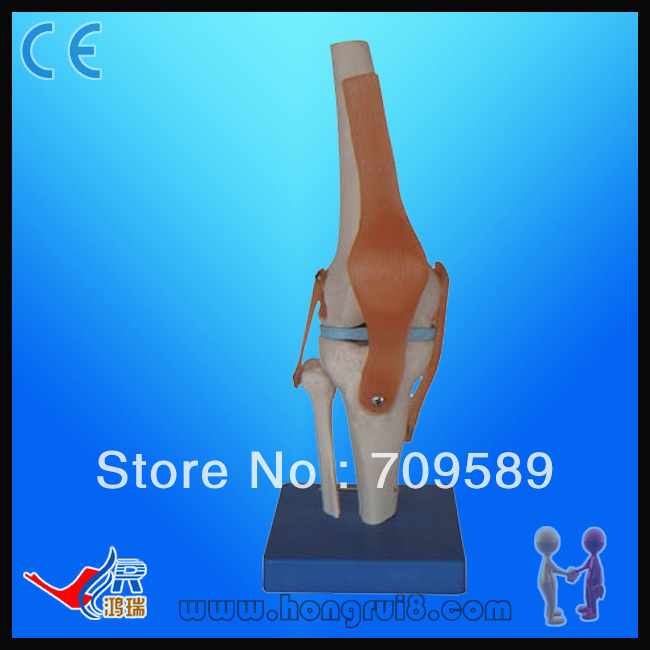 Life Size Human Knee Joint Model plastic standing human skeleton life size for horror hunted house halloween decoration
