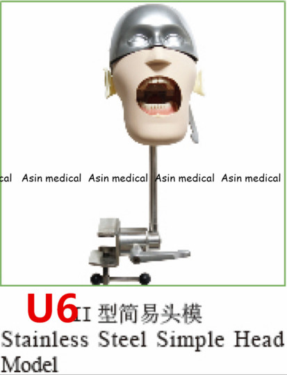 High Quality Stainless steel simple head model Apply to the oral cavity simulation training fixed on the dental chair 12557 cmam dental01 oral simulation practice system dental phantom head for dental school