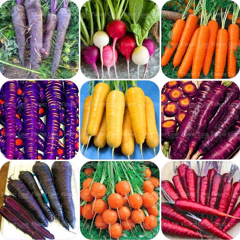 семена овощей и цветов фото дюбель