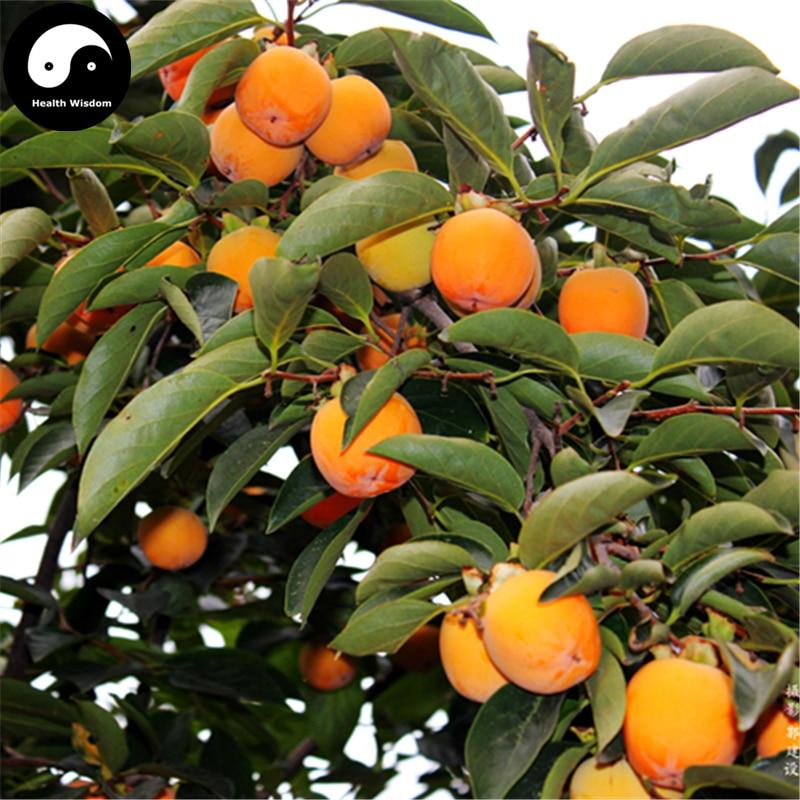 Buy Persimmon Fruit Tree Semente 30pcs Plant Diospyros Kaki For Chinese Fruit Shi