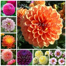 200 pcs Dahlia Flower Plants Jardin Charming Outdoor & Indoor Bonsai Plant For Home Garden Potted Easy to Grow