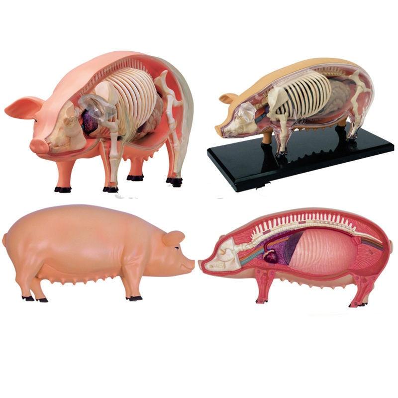 Anime 3D 4D Vison Paard Varken Koe Anatomie Medische Anatomic ...