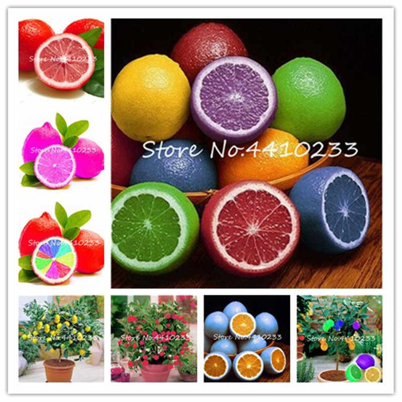 50 Pcs Rare Rainbow Lemon Organic Fruit Dwarf Bonsai Tree Lemon Tree Home Garden Fruit Plant Colorful Bonsai Lemon Can Be Eaten
