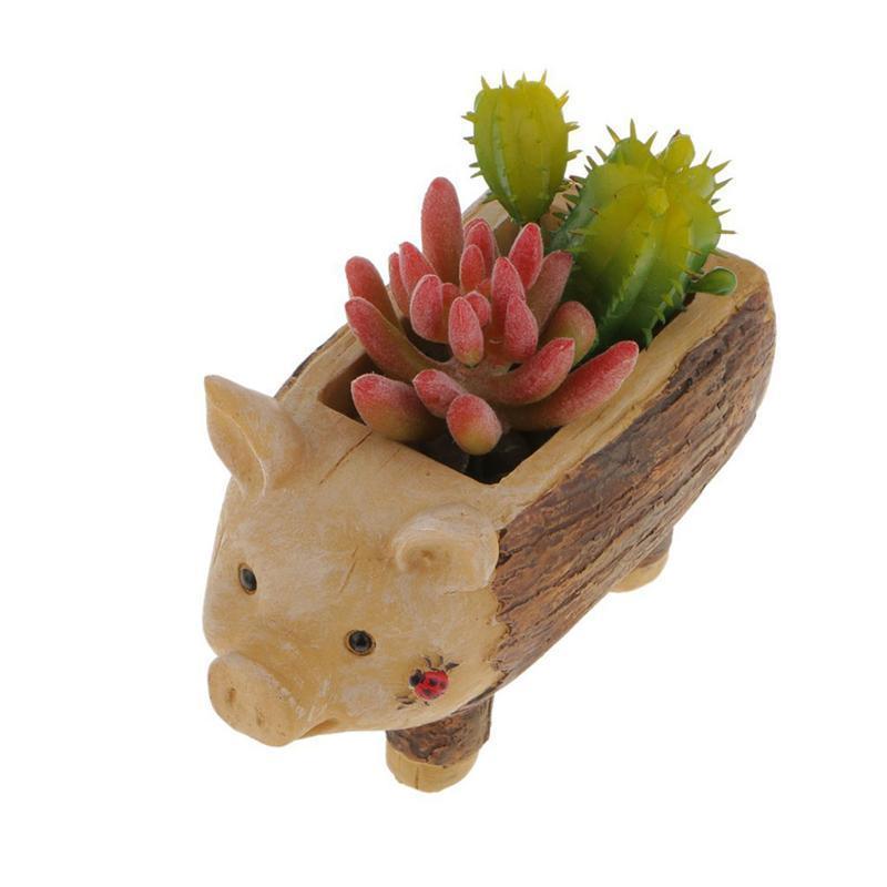Us 1114 35 Offbestoyard Biedronka Piggy Kikut Kwiat Sedum Soczyste Doniczka Bonsai Pole Roślin łóżko W Bestoyard Biedronka Piggy Kikut Kwiat Sedum