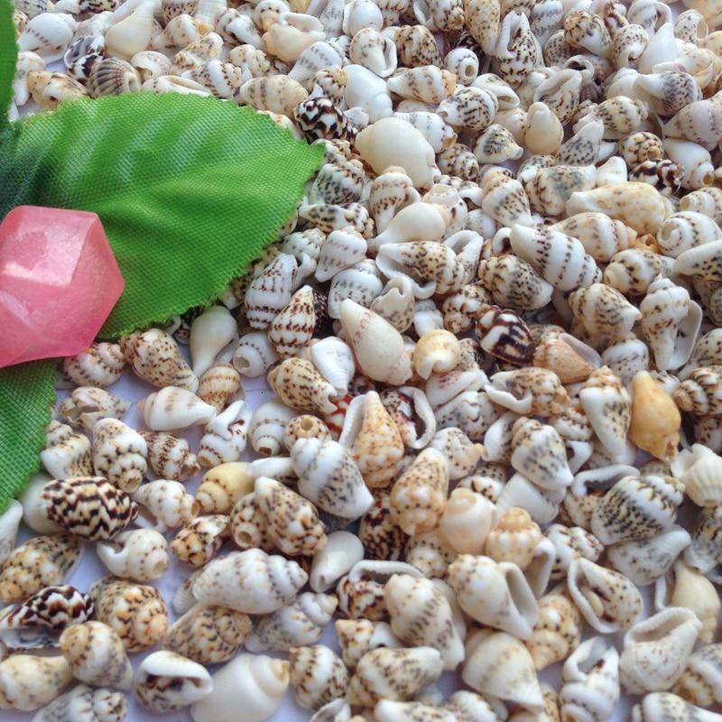Natural mini conch shells 50pcs bag corn screw wall for Bag of seashells for crafts