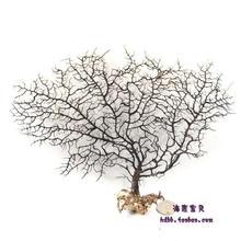 HappyKiss натуральное морское дерево cycas 10-70 см раковина Аквариум Украшение большое горгонское Коралловое дерево натуральное цикас морской аквариум