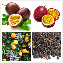 20 pcs/bag passion fruit  Rare flower plant Passiflora Passion for Home Garden