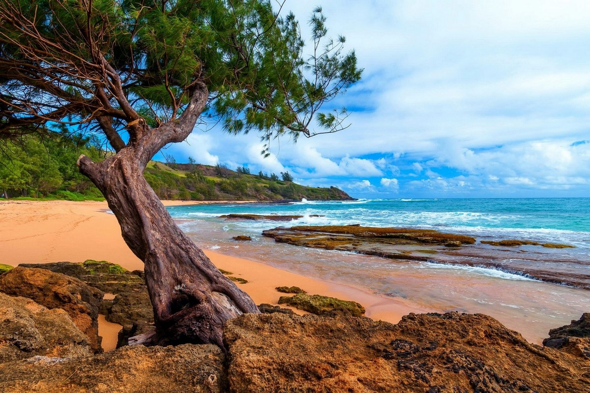 Online Get Cheap Kauai Hawaii -Aliexpress.com   Alibaba Group