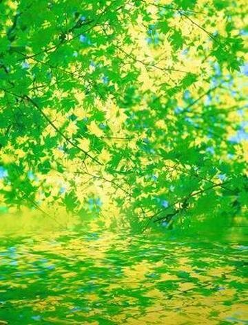 Unduh 5700 Koleksi Background Hijau Pemandangan HD Paling Keren