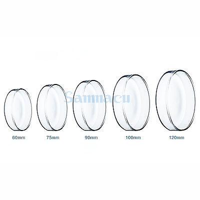 Borosilicate Glass Petri Culture Dish 150/180/200mm with Lids For Laboratory Bacterial Yeast
