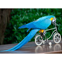 5D DIY Алмазная вышивка Велоспорт Попугай животное Хрустальная мозаика домашняя декоративная настенная живопись Z95