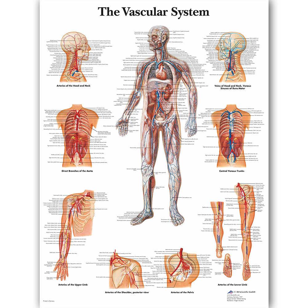 WANGART сосудистая система диаграмма плакат карта холст картина настенные картины для медицинского образования доктора офис класс домашний декор