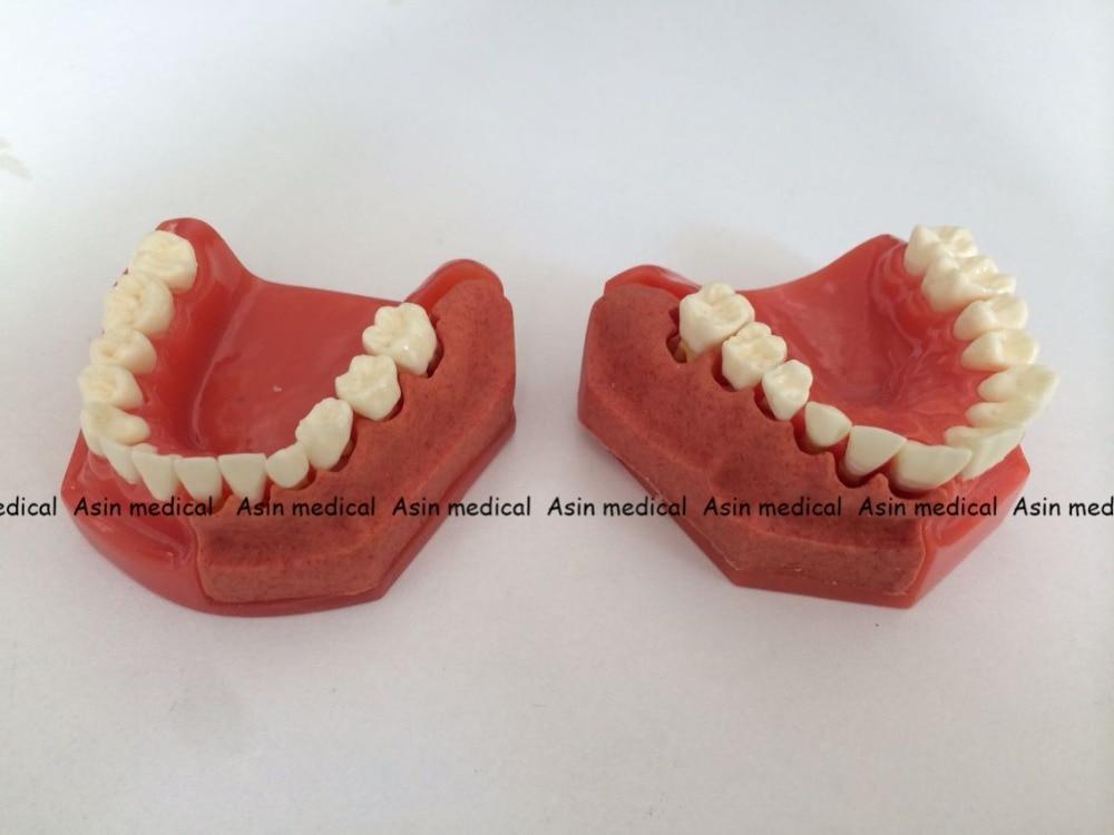 Excepcional Anatomía Dental Panorámica Viñeta - Anatomía de Las ...