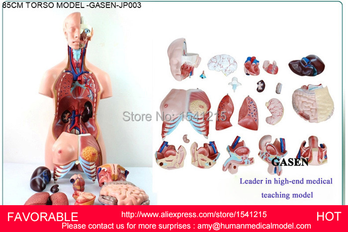 MUSCLE ANATOMY MODEL MEDICAL ORGANS DUMMY MEDICAL MANNEQUIN HUMAN MUSCLE ANATOMY ORGANS ANATOMICAL TORSO ANATOMICAL GASEN-JP003 42cm male 13 torso model torso anatomical model of medical biological teaching aids equipment