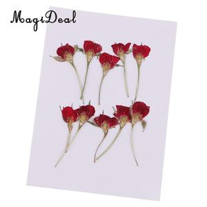 MagiDeal 10 Pieces Pressed Real Dried Flower Half Cut Rose for DIY Home Ornament Resin Casting Making Christmas Card Decoration