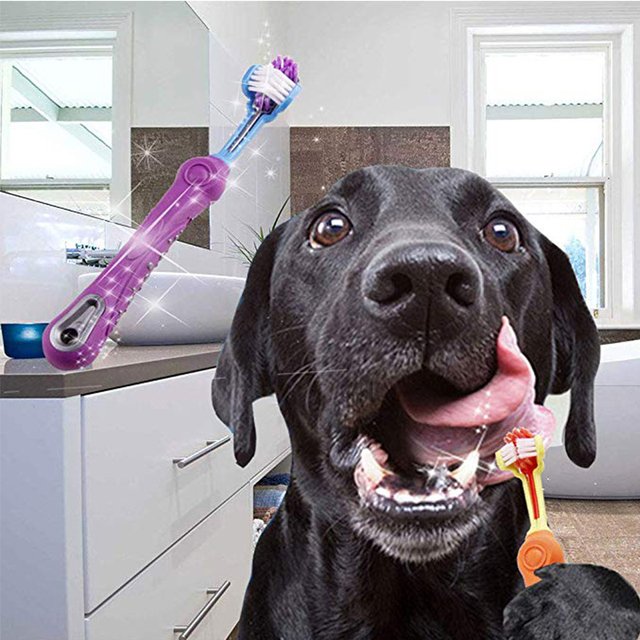 Dog's 3 in 1 Toothbrush
