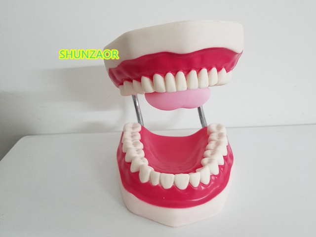 6 kez plastik diş modeli diş manken insan hareketli dil ağız tıbbi frasaco diş
